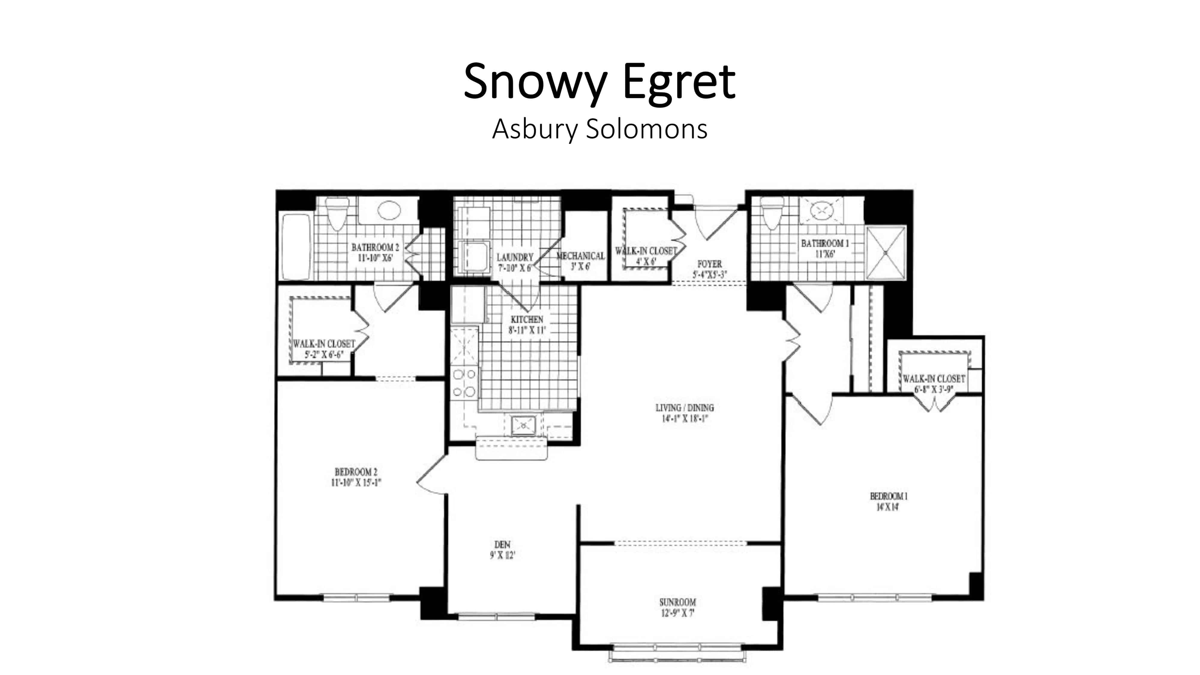 AS_Snowy_Egret