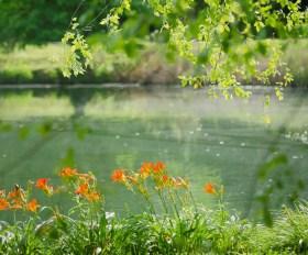 asbury arboretum