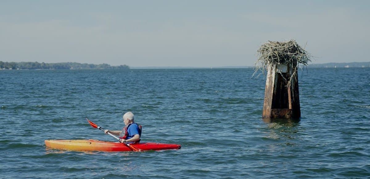 solomons resident kayaking in water