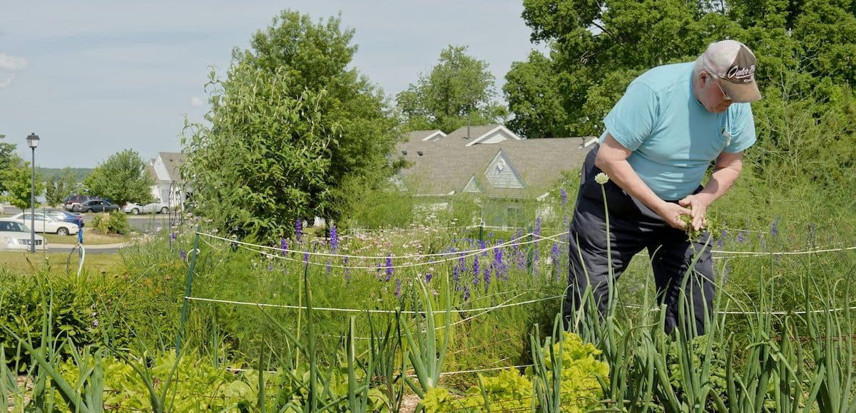solomons resident gardening