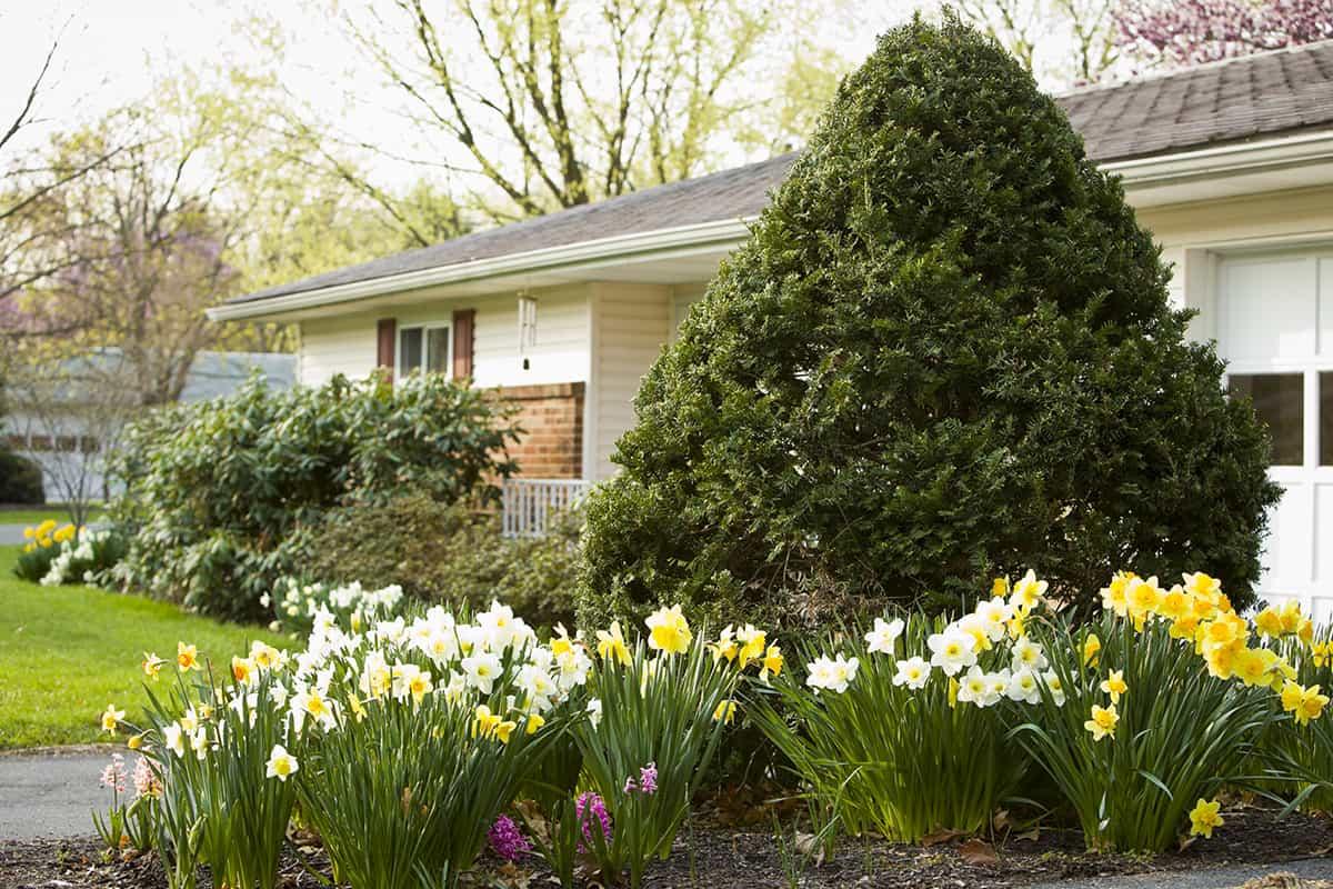 senior home