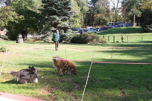 resident at dog park